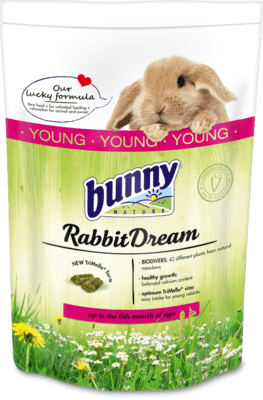 Bunny RabbitDream Young